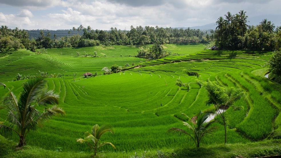 Na Kole Na Bali