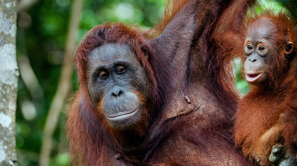 Ostrov Sumatra