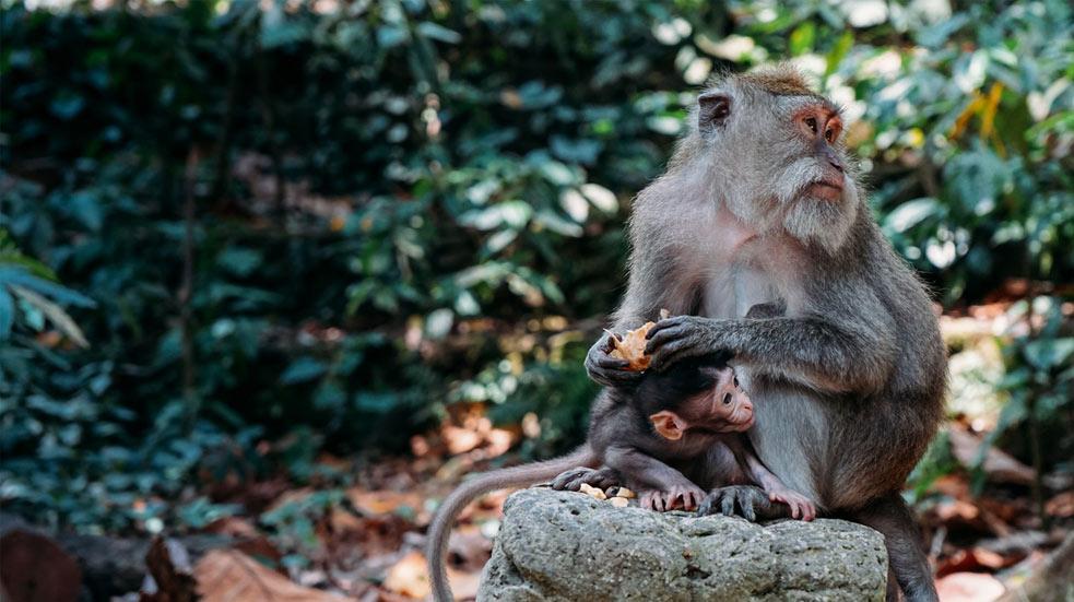Bezpecnost Na Bali