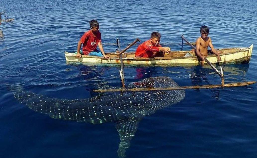 Výlet za žralokem velrybím