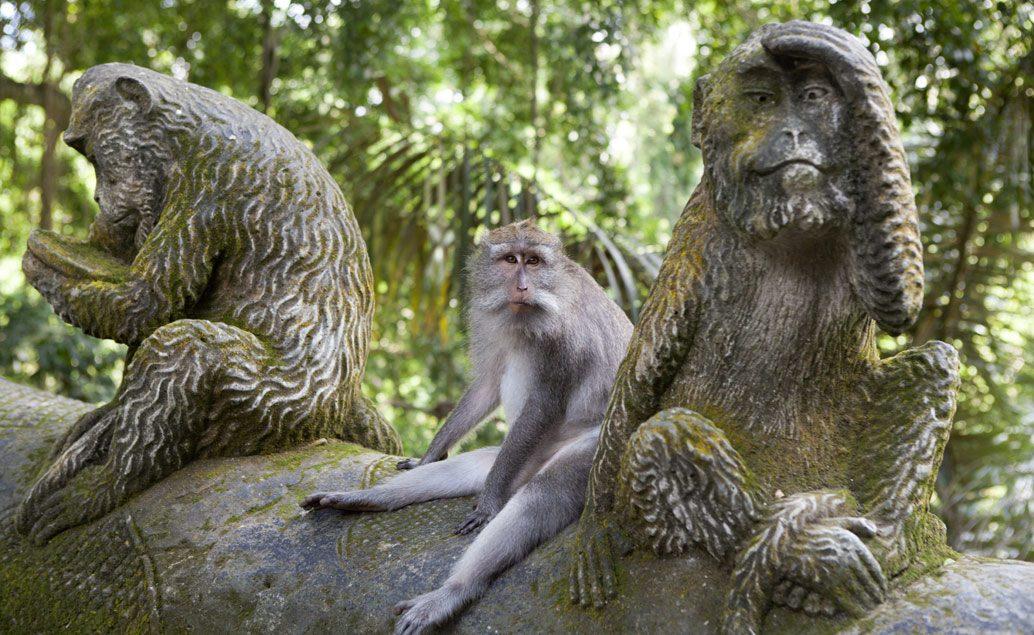 Jóga na Bali s Olgou Šnapkovou