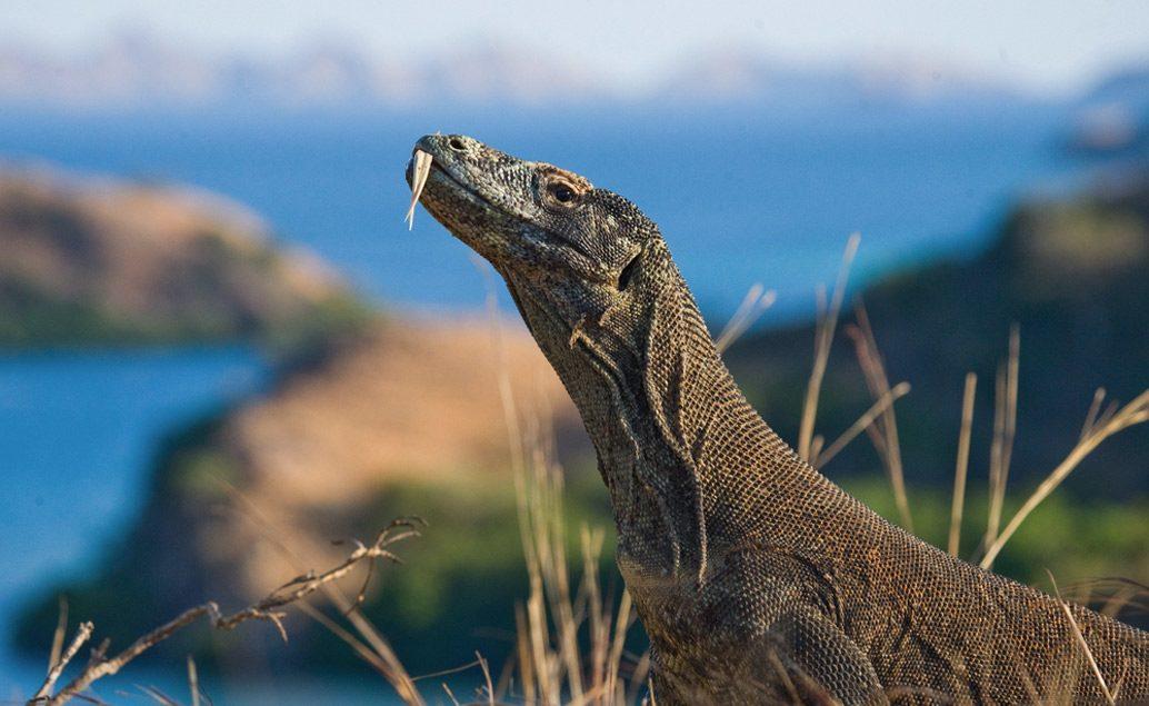 Exotický Flores, komodský drak a mystické Bali