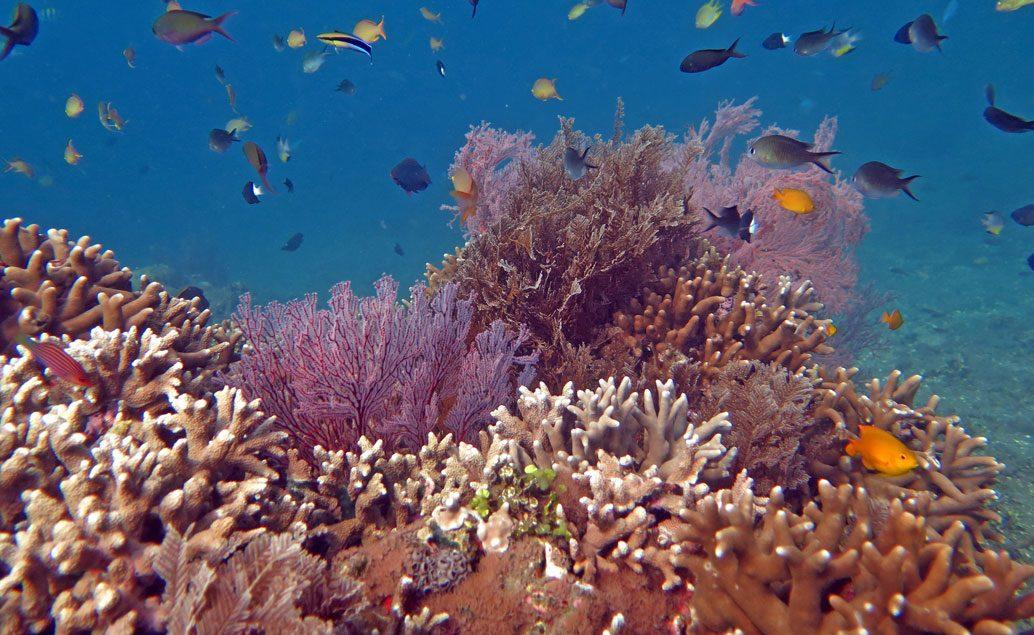 Krásy Bali a sopky na Jávě
