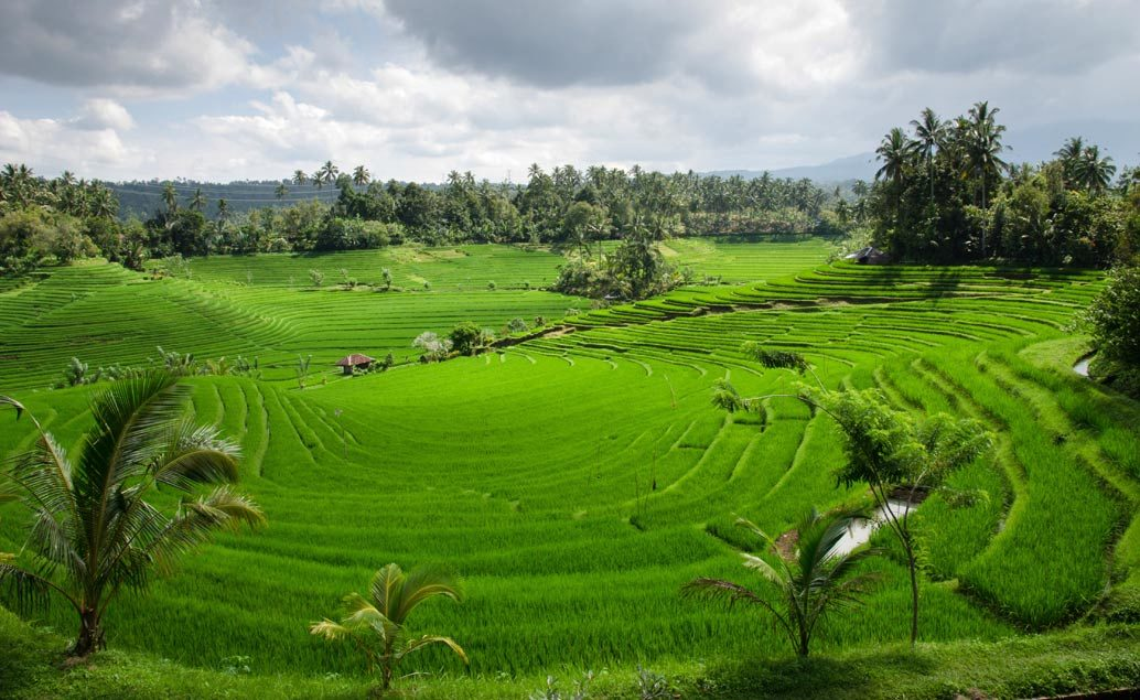 Svatební cesta na Bali